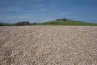 Chesil_Beach